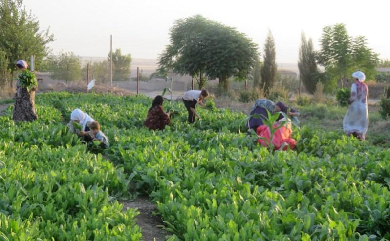 Rojava's economics and the future of the revolution
