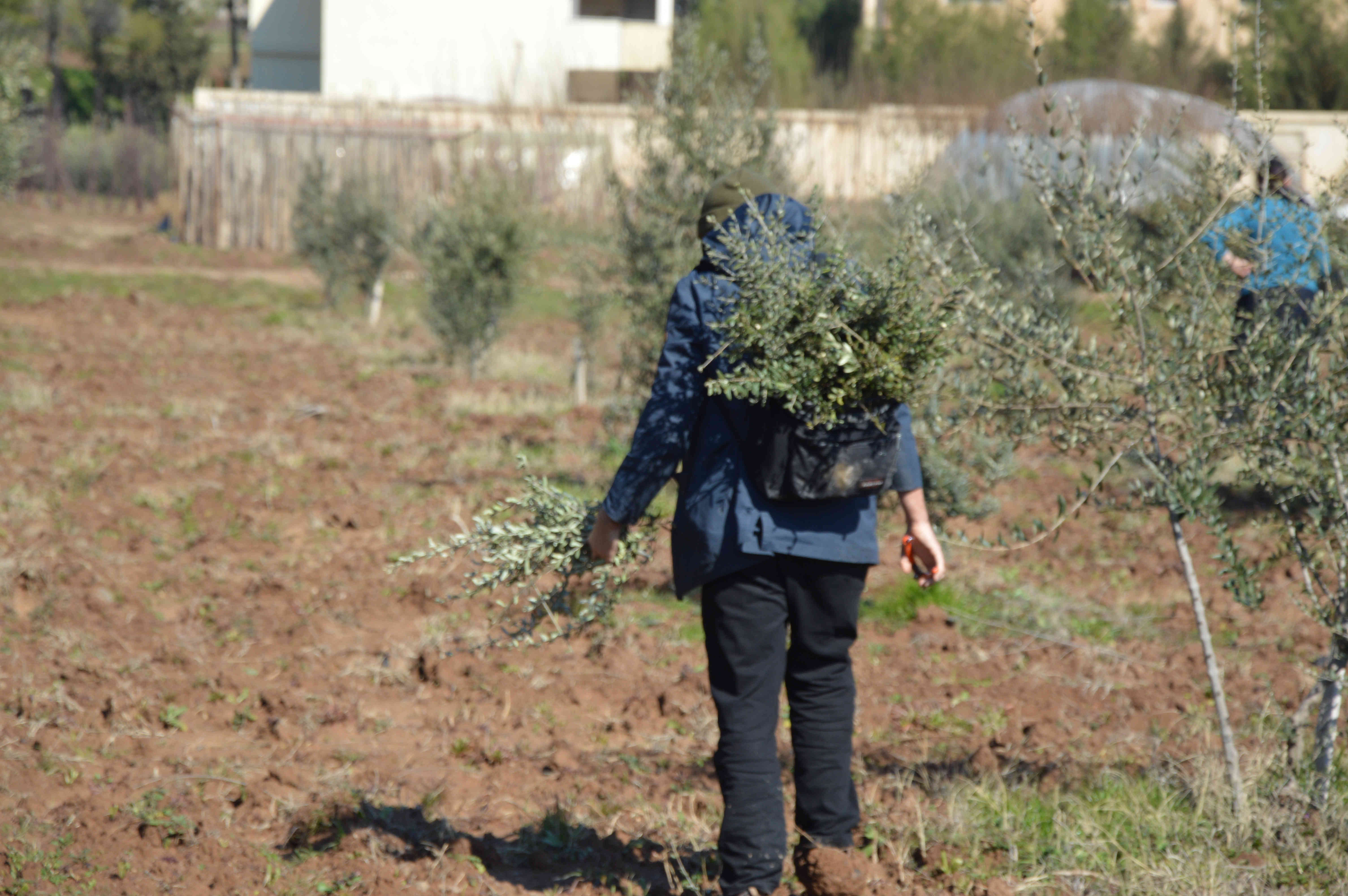 What can we do as ecologists to support the resistance in northeast Syria?